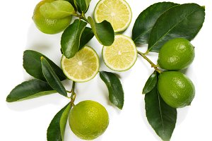 Twig with lime fruits