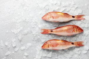 Red mullet fish on icy background
