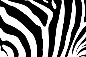 Abstract background skin of a zebra.