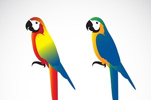 Vector of a parrot (Macaws).