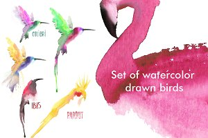 Watercolor birds set