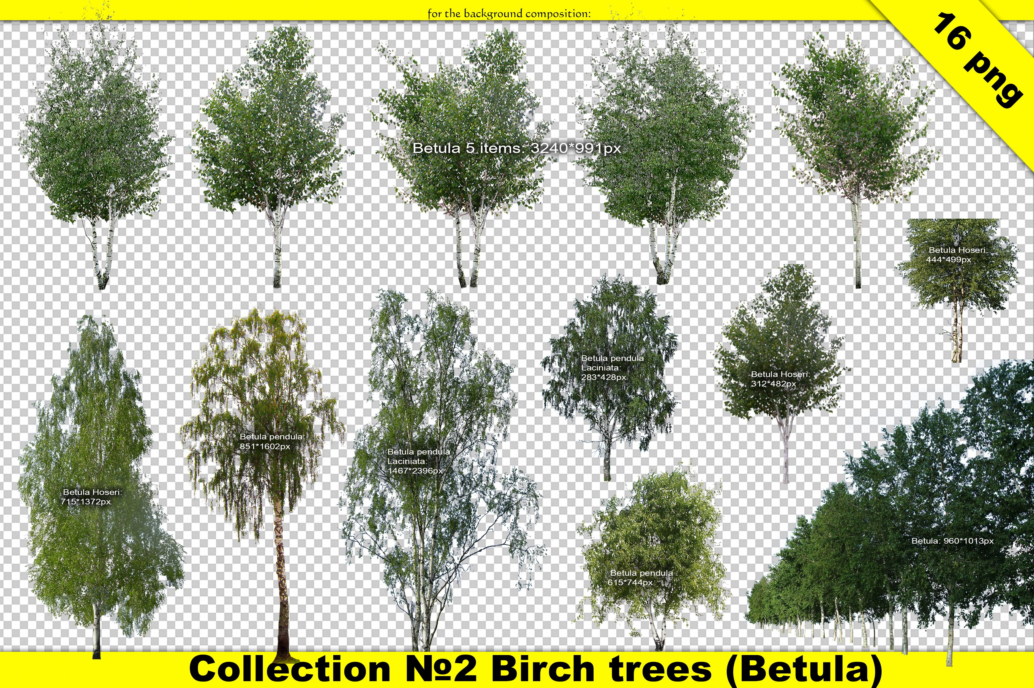 Front Elevation Architecture Of Market : Landscape designer cut out tree set graphic objects