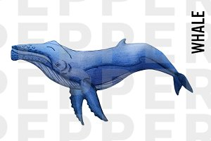 Whale Illustration Clipart