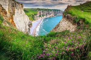 Colorful flowers on the cliffs