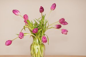 Bouquet of beautiful pink tulips