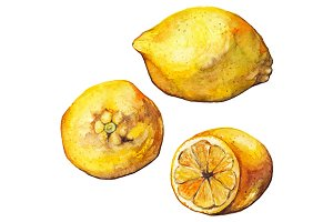 Watercolor lemon citrus fruit vector