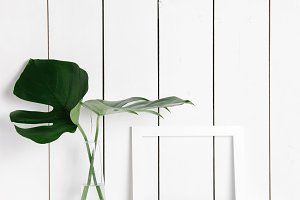 White frame & monstera