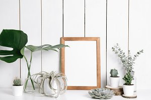 Collection of plants & frame