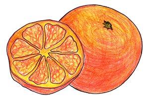 Orange exotic fruit hand drawn art