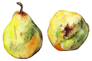 Watercolor ripe pear fruit vector