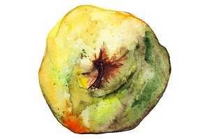 Watercolor ripe pear fruit vector
