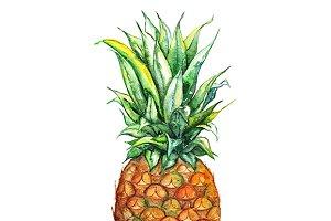 Watercolor pineapple exotic fruit