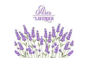 The lavender elegant card.