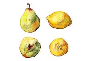 Watercolor lemon pear fruit set