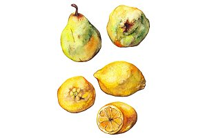 Watercolor lemon pear fruit set