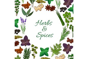 Spices and spicy herbs seasonings vector poster