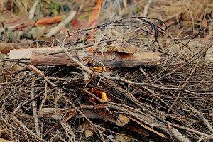 Close Up Campfire