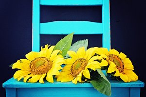 Sunflowers in a Chair