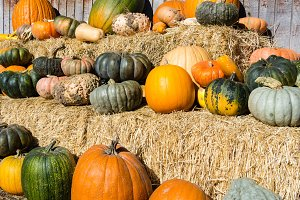 Pumpkins & squash on hay bales