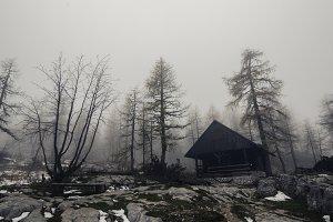 Cottage in the Dark Autumn Forest