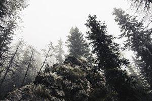 Gloomy and Foggy Autumn Forest
