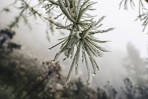Snow and Ice on the Branch