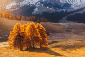 Morning light on Alpe Di Siusi  Web