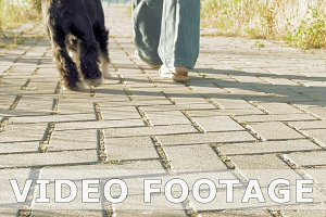 Young woman's feet walking with little funny dog