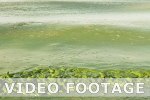 Algal bloom polluted water green color in lake