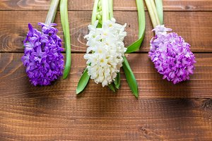 Fresh hyacinth flowers on wooden background. Beautiful idea for greeting cards for Valentine's day, March 8 and mother's day. Free space