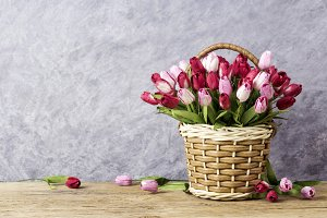 Tulip in basket