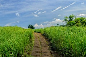 Panorama image of beauty sunny day on the rice field