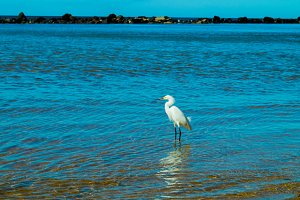Heron – blue beach