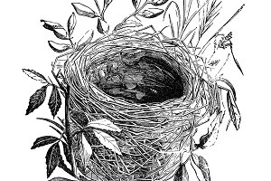 Bird Nest Illustration