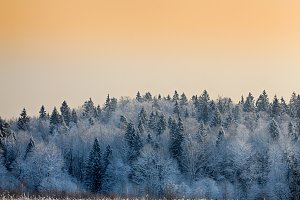 Winter landscape with snow-covered trees at sunset