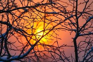 Winter red orange sunet through branches