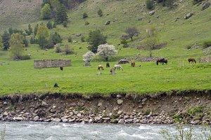 Horses on a hillside.