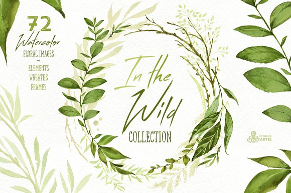 In the Wild. Forest Collection - Illustrations