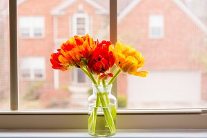 Beautiful tulips flowers bouquet