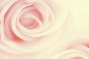 sweet color of flower background