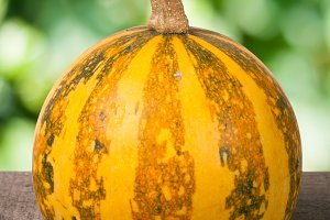 Small decorative orange pumpkin on a wooden board with blurred garden background