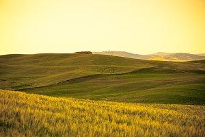 Tuscan gold hills landscape