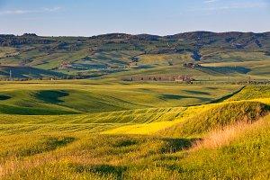 Tuscan gold hills
