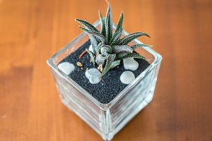 small cactus in glass pot