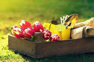 Spring or summer concept. Garden.