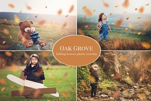 Oak Grove - falling leaves overlay