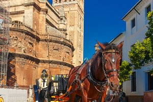 Horse carriage near Giralda, Seville, Spain.
