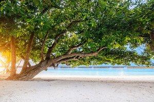 Green tree at tropical island beach