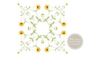 Calendula Ornamental patterns.