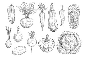 Vegetables sketch vector isolated icons